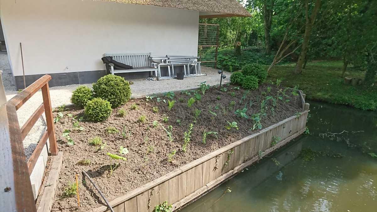Tuin Alblasserdam beplanting